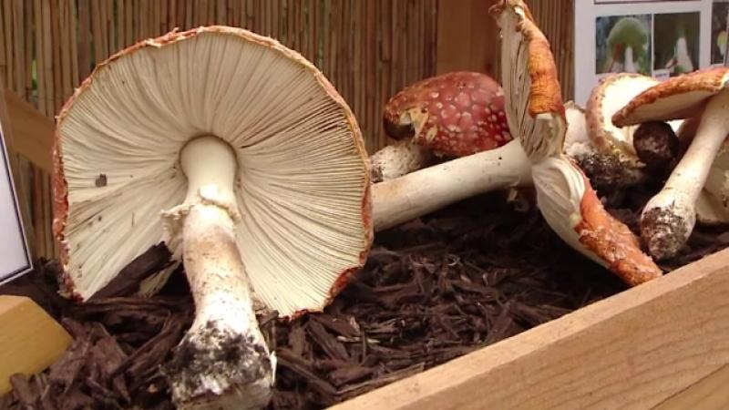 Bărbat în stare gravă la spital, după ce a mâncat tocăniță de ciuperci