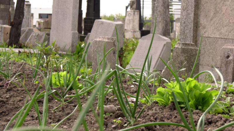 Cimitir transformat în grădină