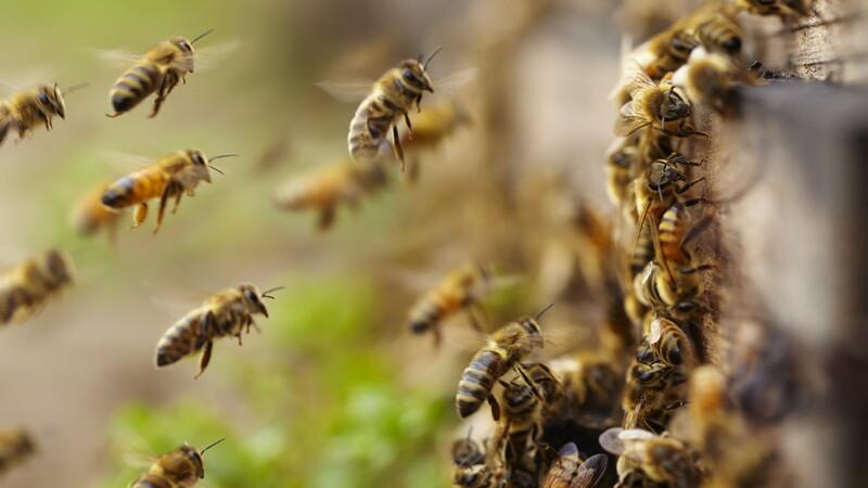 Bărbat mort înțepat de albine