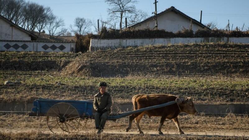 Agricultura in Coreea de Nord