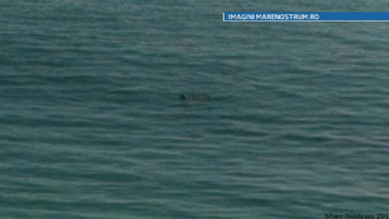 foca Marea Neagra