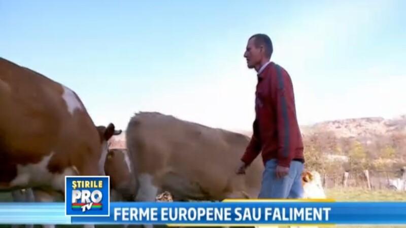Conditiile pe care vor trebui sa le respecte fermierii care vand lapte de la 1 ianuarie 2014