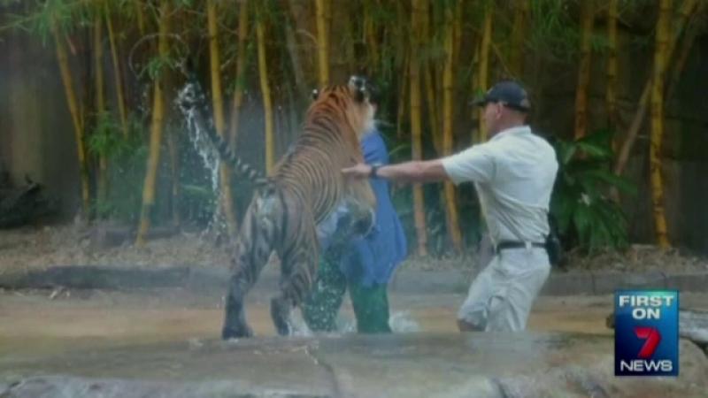 atac tigru