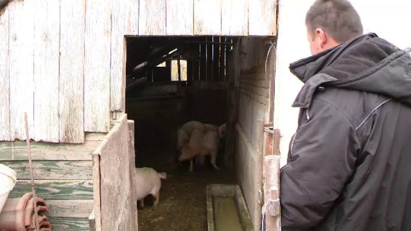 Fermierii au dat startul ofertelor de Craciun la carnea de porc. Cat costa anul acesta un kilogram