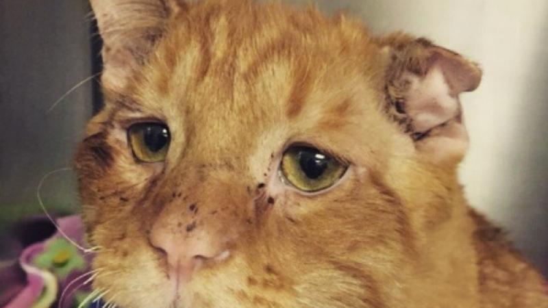 Cea mai depresiva pisica din lume a fost adoptata cu o zi inainte de a fi eutanasiata. Cum s-a imbunatatit starea ei