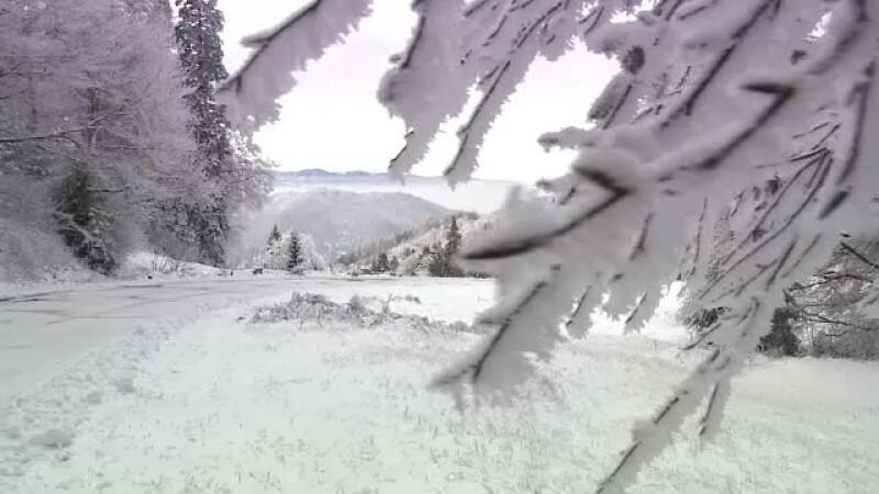 iarna, ninsoare