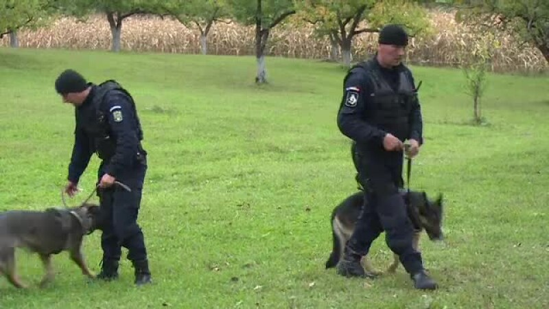 cautari politie caini