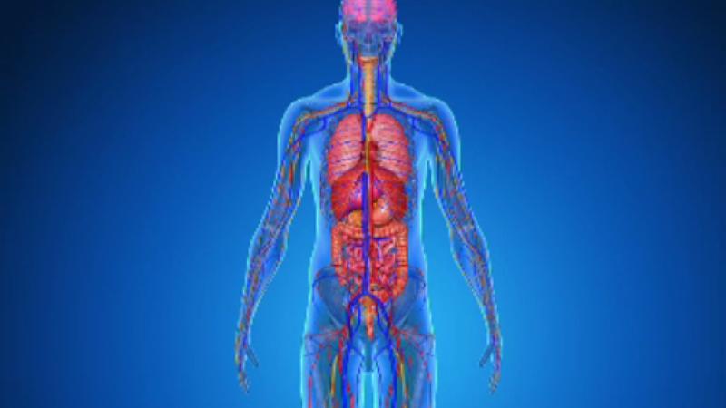 Hemoroizii, cauze și tratament. Când este necesară o vizită la medic