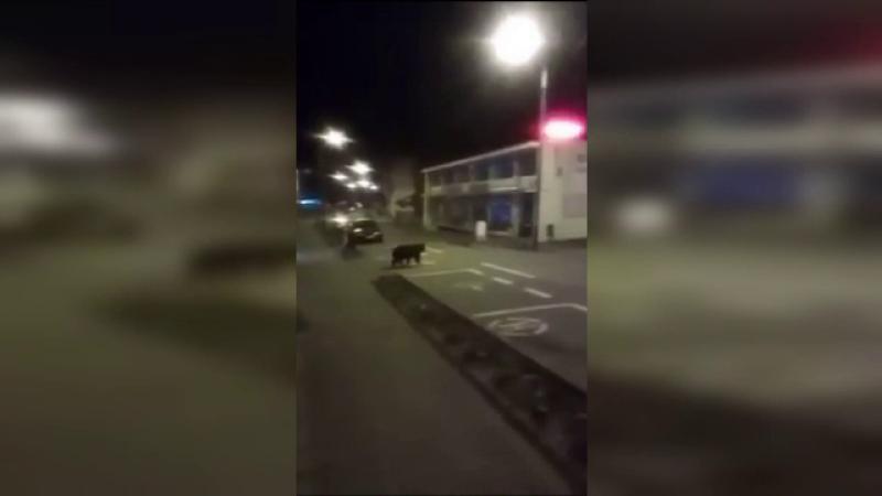 Urs in statiunea Sovata