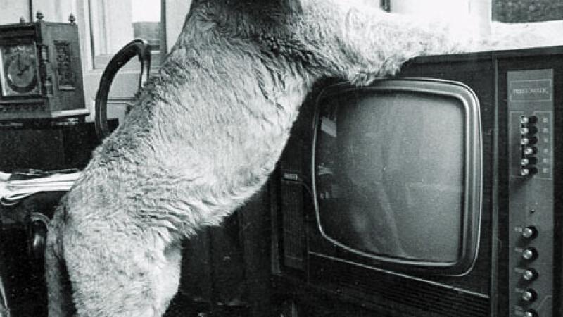 Vezi povestea incredibila a unui pui de leu crescut in Londra