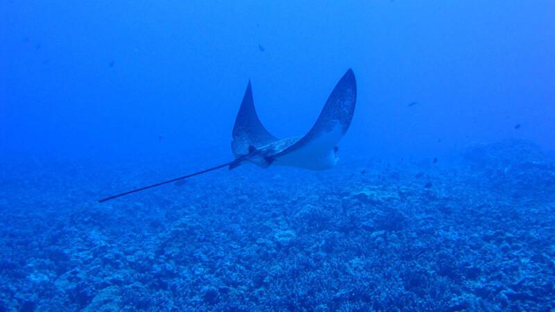 Imagini incredibile din Oceanul Pacific