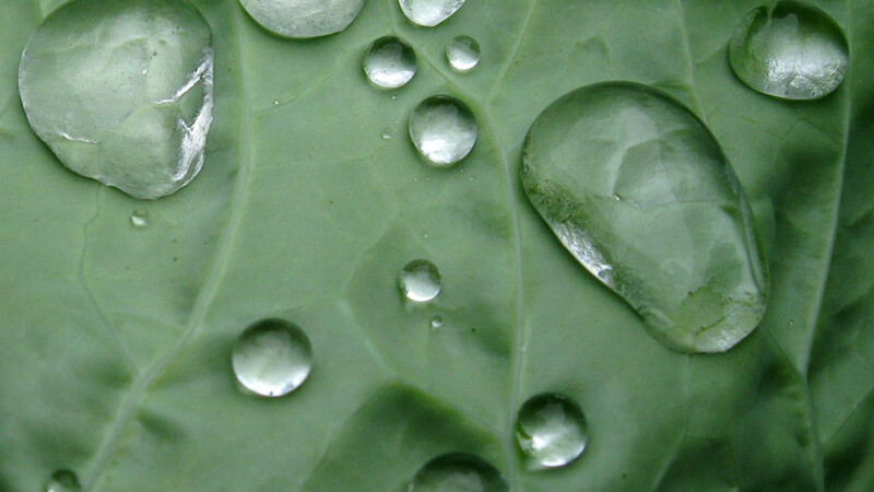 picatura ploaie