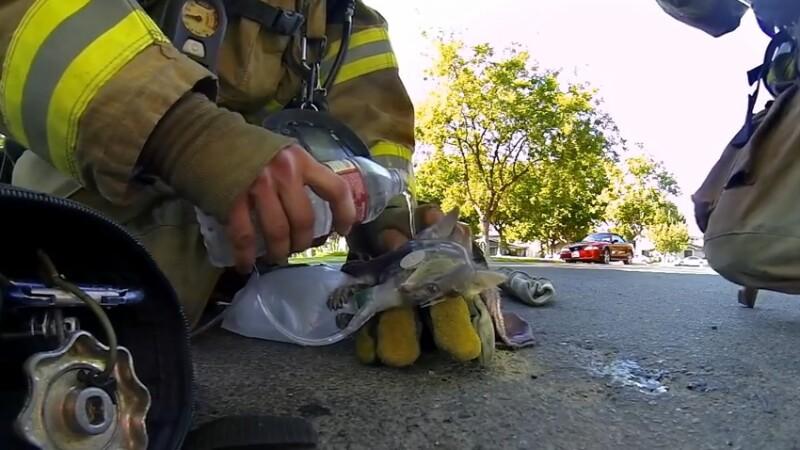 Pisica salvata de pompier
