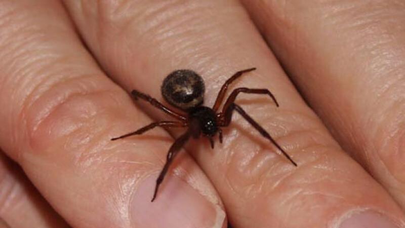 A fost la un pas de moarte din cauza unei muscaturi de paianjen. Decizia luata de medicii in cazul femeii de 44 de ani