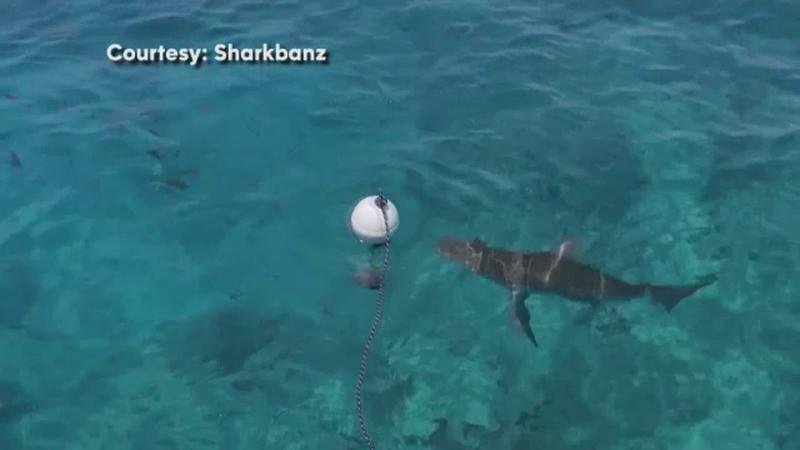 anti rechin
