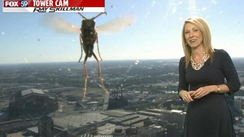 O prezentatoare meteo din SUA a avut parte de o sperietura zdravana in direct. Insecta care a facut-o sa tipe de groaza