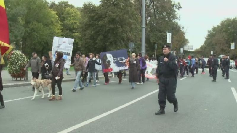 protest caini