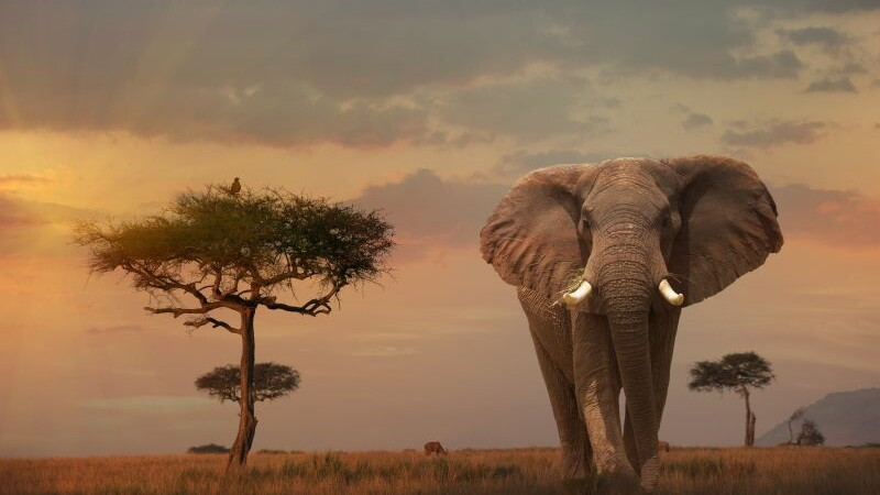 WWF: doua treimi din animalele salbatice de pe planeta vor disparea pana in 2020. Raportul ingrijorator