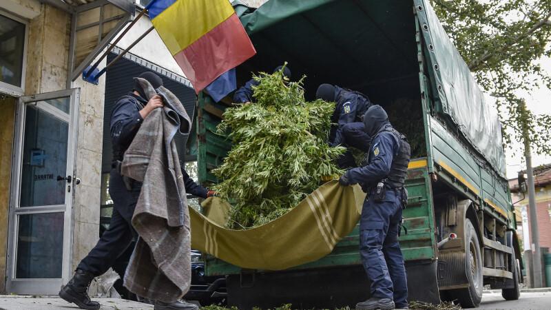 cannabis, plantatie, mehedinti,