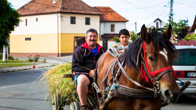 caruta pe sosea in Risnov