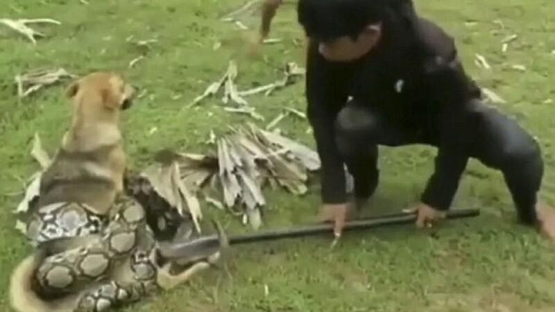 Momentul dramatic în care trei copii intervin să-și salveze câinele atacat de un șarpe uriaș VIDEO