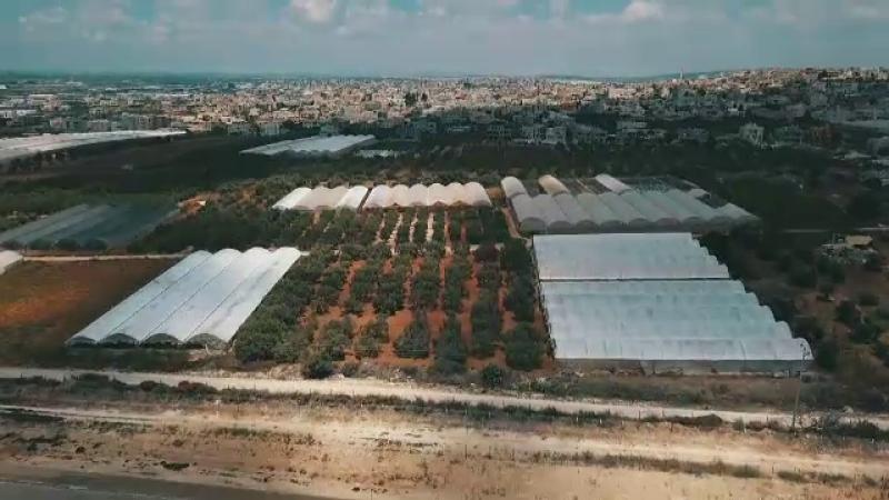 Exemplul Israelului, ţara care a devenit unul dintre cele mai dezvoltate state agrare din lume