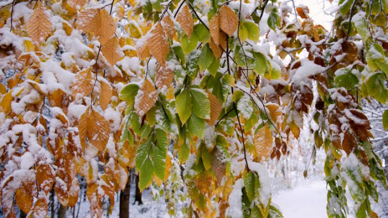 Vremea 18 noiembrie 2018. Regiunile in care va ninge abundent