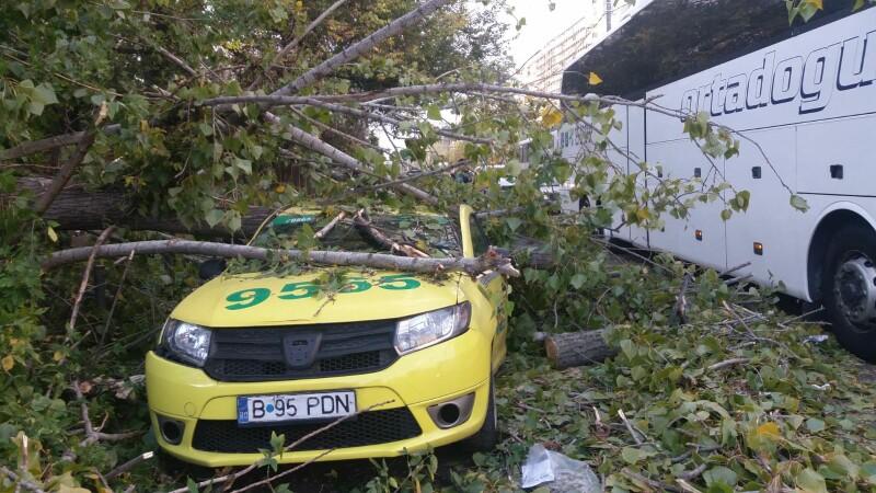 copac căzut pe mașină, Capitală