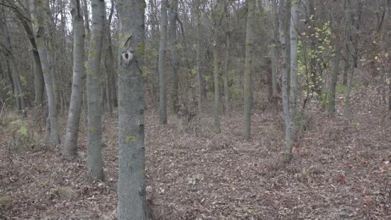 Un bărbat din Neamț și-a pierdut viața, după ce a căzut un copac peste el