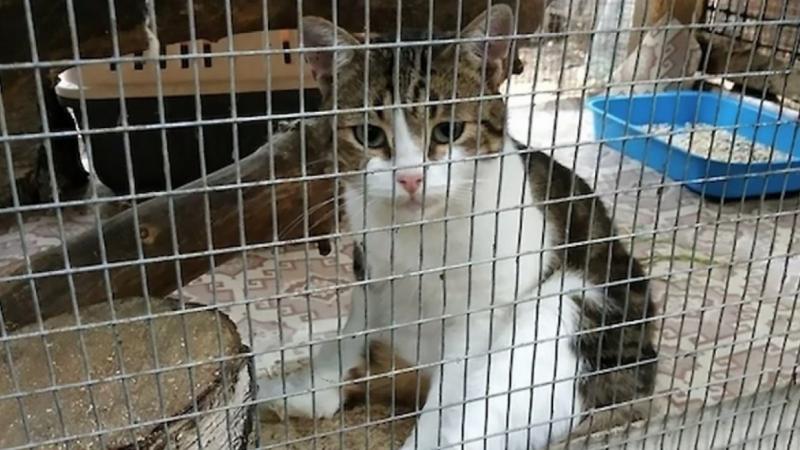 pisica traficant de droguri