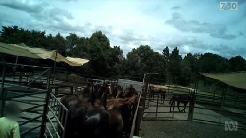 Cai torturați și măcelăriți în Australia - 3