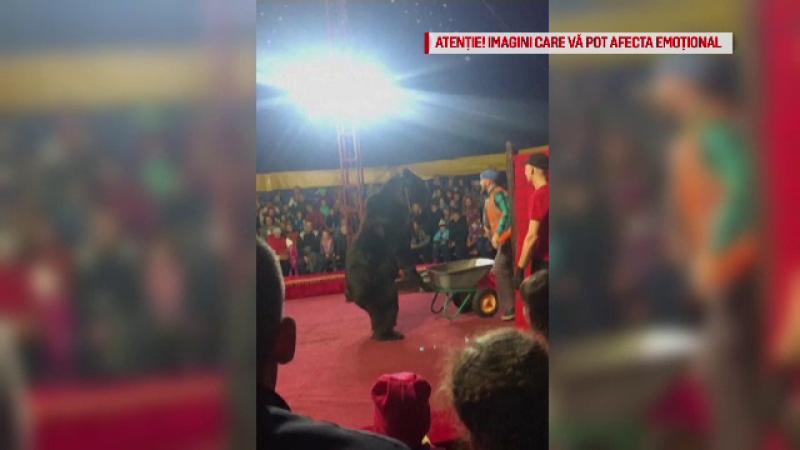 Spectacol de circ cu final dramatic. Momentul în care un urs și-a atacat dresorul