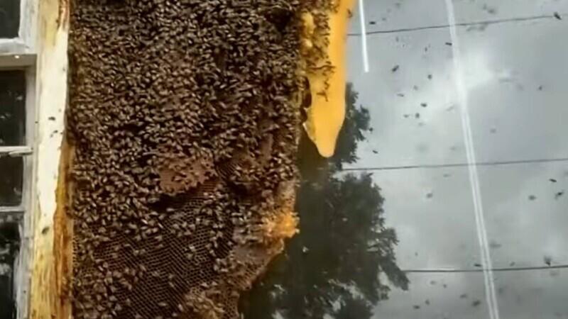 albine casa parasite