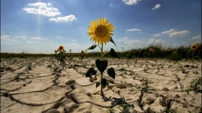 Seceta pustieste Romania! Agricultorii cultiva plante exotice