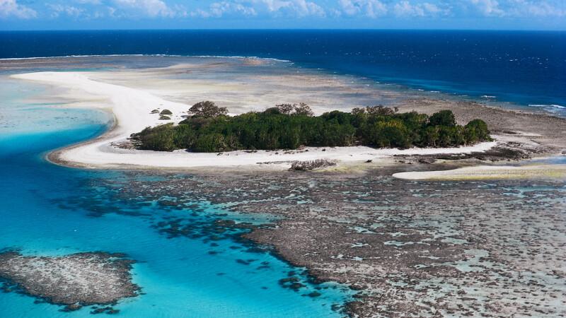 Australia: au fost descoperite sute de specii marine noi