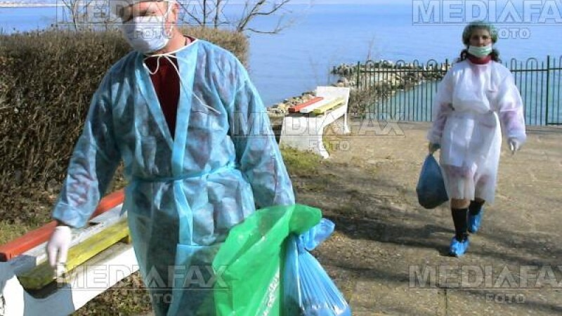 O lebada cazuta din zbor a declansat alerta de gripa aviara la Buzau