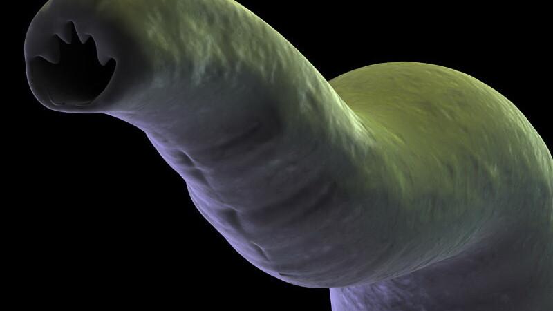 vierme intestinal
