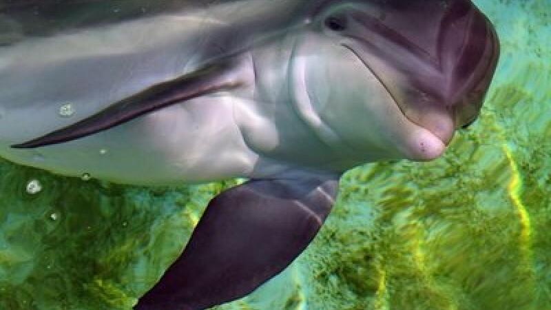 Delfin - Mediafax