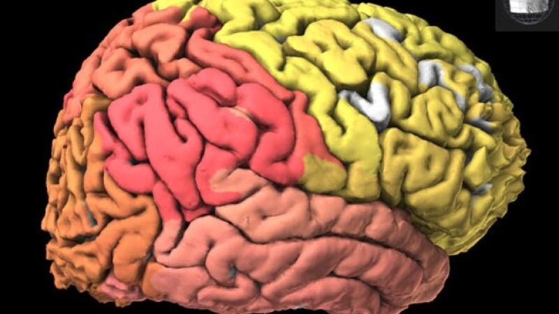 Atlas al creierului