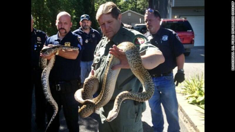 Autoritatile din SUA au descoperit 850 de serpi in casa unui barbat