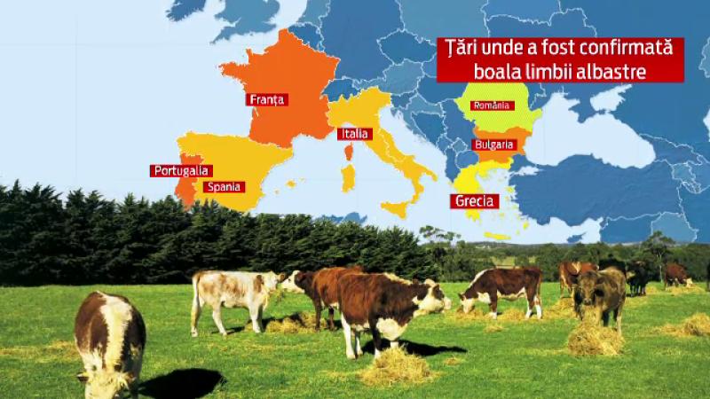 harta vaci