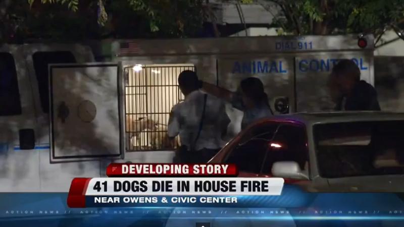 Cel putin 41 de caini au murit intr-un incendiu la o casa din Las Vegas. Proprietarul avea peste 90 de animale in locuinta