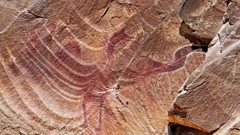 pictura rupestra pterodactil