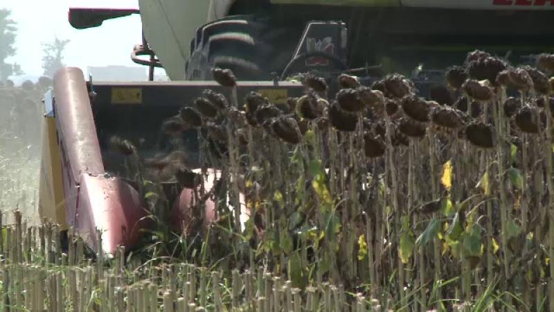 culturi agricultura