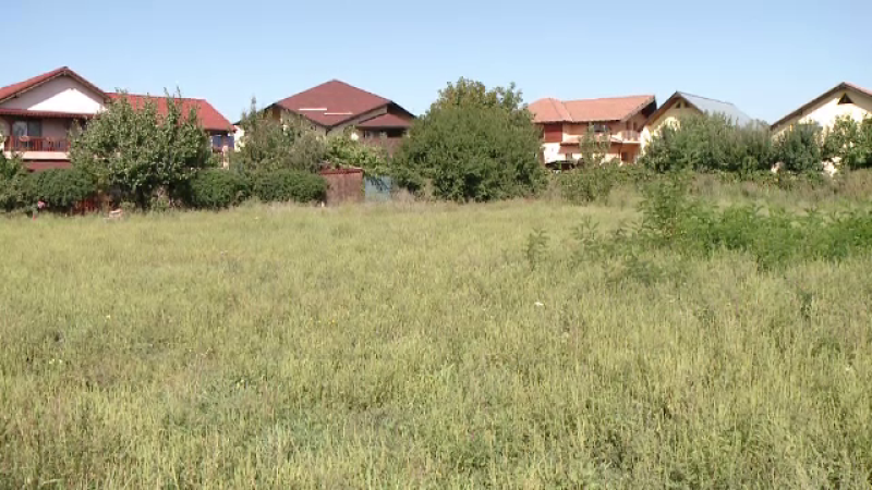 Un deputat liberal declara razboi unei buruieni care creste peste tot in Romania. Cat de periculoasa este planta