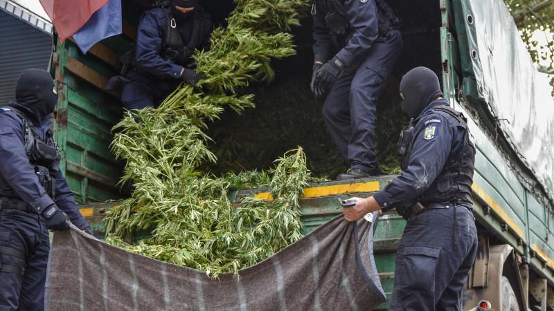 Captură record de cannabis într-un sat din România. Câte tone au descoperit procurorii DIICOT