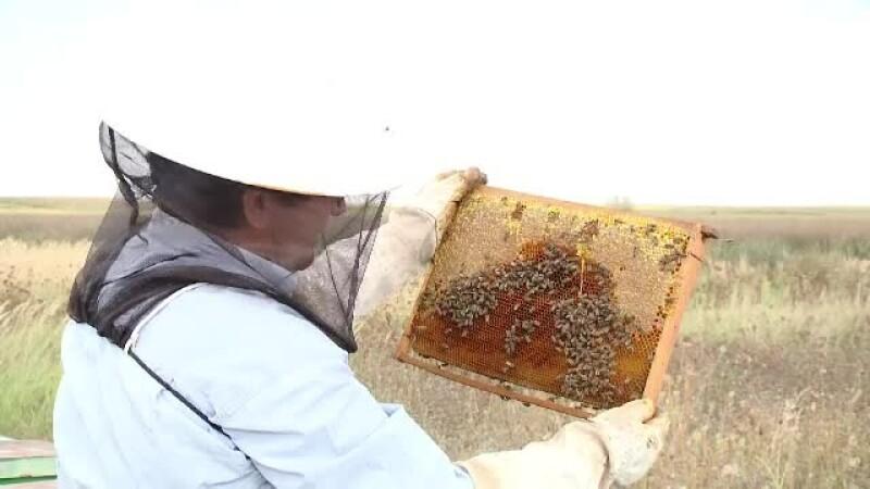 România a pierdut primul loc în UE la producţia de miere. De ce
