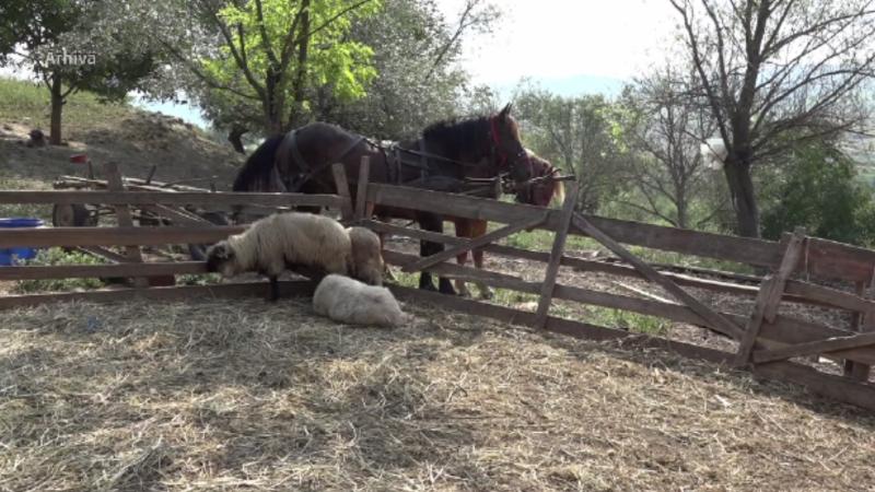 Cioban la un pas de moarte, după ce a fost atacat de o ursoaică cu doi pui. Cum a fost găsit