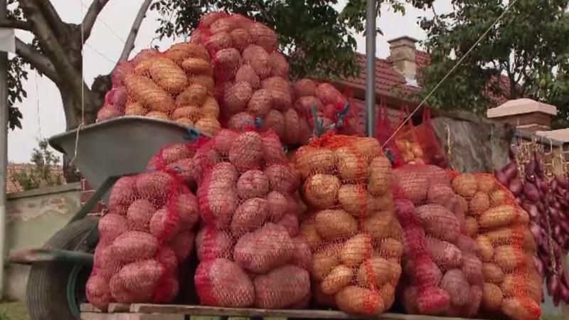 Românii au început să-și facă provizii pentru iarnă. Cartofii, mai scumpi decât anul trecut