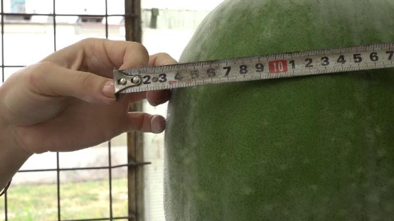Legume exotice, produse la Buzău